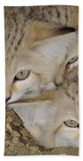 Sand Cat Felis Margarita Beach Towel