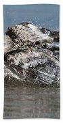 Sanderling Pictures 29 Beach Towel