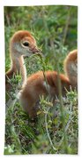 Sandhill Chicks Beach Towel