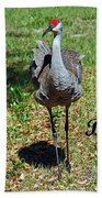 Sandhill Crane Birthday Beach Towel