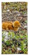 Sandhill Crane Chick Beach Sheet