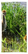 Sandhill Crane Chicks  Beach Towel