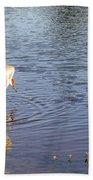 Sandhill Crane Vs Alligator Beach Towel
