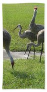Sandhill Cranes Family Beach Towel by Zina Stromberg