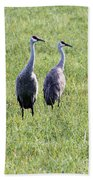 Sandhill Cranes In Wisconsin Beach Towel
