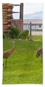 Sandhill Cranes On The Lawn By The Statue Of Mary In Homer-alaska Beach Towel