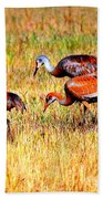 Sandhill Family Beach Towel
