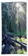 Santa Barbara Eucalyptus Forest II Beach Towel