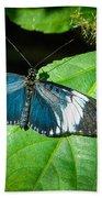 Sapho Longwing Butterfly Beach Towel