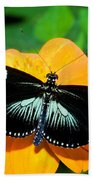 Sara Longwing Butterfly Beach Towel