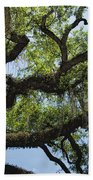 Savannah Live Oak And Spanish Moss Beach Towel