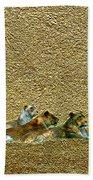 Savannah Queens Beach Towel
