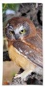 Saw-whet Owl In Conifers Beach Towel