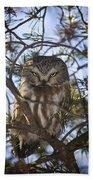 Saw Whet Owl Beach Towel