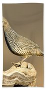 Scaled Quail Callipepla Squamata Beach Towel