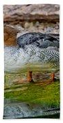 Scaly-sided Merganser Hen Beach Towel