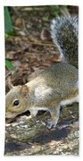 Scampering Squirrel Beach Towel