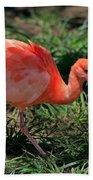 Scarlet Ibis Hybrid Beach Towel