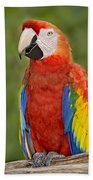 Scarlet Macaw Parrot Beach Towel
