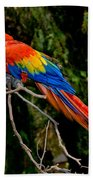 Scarlet Macaw Perched Beach Towel