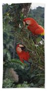 Scarlet Macaws In Rainforest Canopy Beach Towel