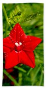 Scarlet Morning Glory - Horizontal Beach Towel