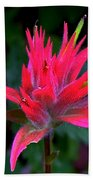 Scarlet Paintbrush On Swiftcurrent Pass Trail In Glacier National Park-montana Beach Towel