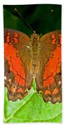 Scarlet Peacock Butterfly Beach Towel