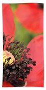 Scarlet Poppy Macro Beach Towel
