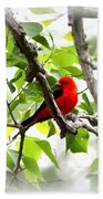 Scarlet Tanager - 19 Beach Towel