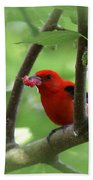 Scarlet Tanager - Fallout Beach Towel