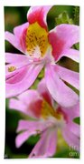 Schizanthus Named Angel Wings Beach Towel