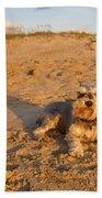 Schnauzer At Dawn Beach Towel