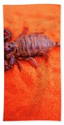 Scorpion Red Sand Sting Insect Beach Sheet