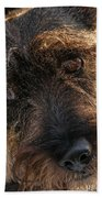 Scottish Terrier Closeup Beach Sheet