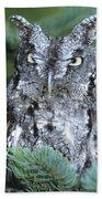 Screech Owl Straight On Beach Towel