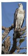 Sea Eagle And Brown Kite Sharing A Tree Beach Towel