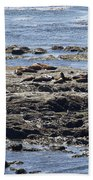 Sea Lion Resort Beach Towel