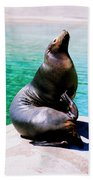 Sea Lion Beach Towel