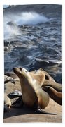 Sea Lions Seek Shelter Beach Towel