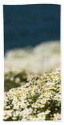 Sea Mayweed And The Sea Beach Towel
