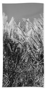 Sea Oats In The Glades Beach Towel