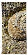Sea Shell Rock Beach Towel