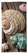 Sea Shells With Urchin  Beach Towel
