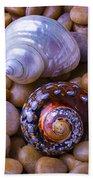 Sea Snail Shells Beach Towel