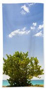 Seagrape Tree Beach Towel