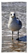 Seagull At Low Tide Beach Towel