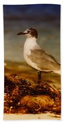 Seagull At The Keys Beach Towel