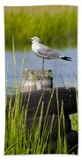Seagull At Weeks Landing Beach Towel
