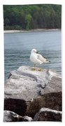 Seagull Awaits Beach Towel
